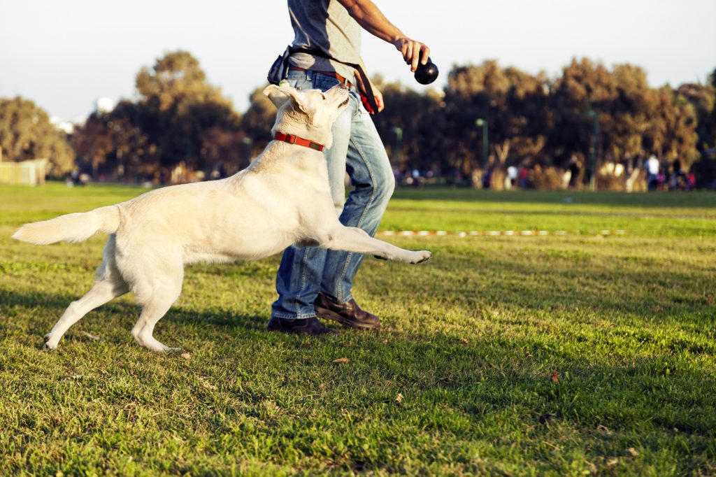 Give your pet plenty of exercise