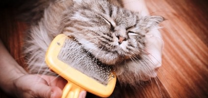 Give Your Cat a Brushing